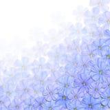 Μπλε ανασκόπηση λουλουδιών ελεύθερη απεικόνιση δικαιώματος