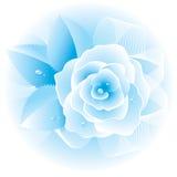 μπλε αυξήθηκε διάνυσμα Στοκ Φωτογραφία