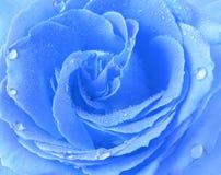 Μπλε αυξήθηκε Στοκ Εικόνες
