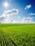 μπλε βαθύς ουρανός χλόης Στοκ Εικόνες