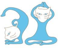 μπλε γιόγκα άσκησης γατών Στοκ Εικόνα