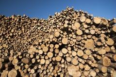μπλε δάσος ουρανού σωρών Στοκ εικόνες με δικαίωμα ελεύθερης χρήσης