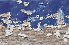μπλε δάσος χρωμάτων Στοκ Εικόνες