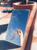 Μπλε δέντρα καρφιών ουρανού στοκ εικόνα με δικαίωμα ελεύθερης χρήσης