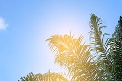 μπλε δέντρα ουρανού φοιν&iota ταξίδι, καλοκαίρι, διακοπές και τροπική παραλία Στοκ Φωτογραφία