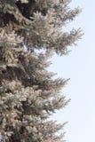 Μπλε ερυθρελάτες ενάντια στον ουρανό Στοκ φωτογραφίες με δικαίωμα ελεύθερης χρήσης