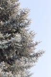 Μπλε ερυθρελάτες ενάντια στον ουρανό Στοκ Εικόνα