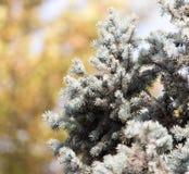Μπλε ερυθρελάτες στη φύση Στοκ Εικόνες