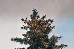 Μπλε ερυθρελάτες στο υπόβαθρο ουρανού Στοκ εικόνες με δικαίωμα ελεύθερης χρήσης