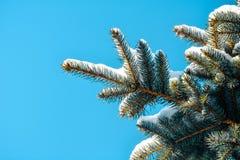μπλε ερυθρελάτες Στοκ Φωτογραφίες