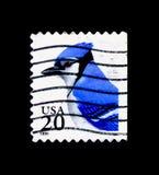 Μπλε ζήτημα του Jay (cristata Cyanaocitta), χλωρίδας και πανίδας serie, CI στοκ εικόνες