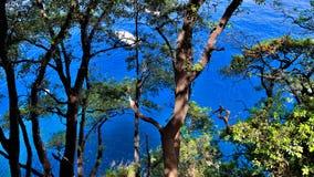 μπλε θάλασσα riviera portofino πάρκων της Ιταλίας ακτών Στοκ εικόνα με δικαίωμα ελεύθερης χρήσης