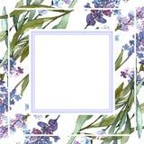 Μπλε ιώδη lavender floral βοτανικά λουλούδια r r ελεύθερη απεικόνιση δικαιώματος