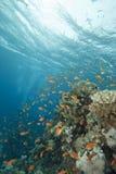 μπλε καθαρό τροπικό ύδωρ ψ&alph Στοκ φωτογραφία με δικαίωμα ελεύθερης χρήσης