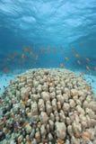 μπλε καθαρό τροπικό ύδωρ ψ&alph Στοκ εικόνα με δικαίωμα ελεύθερης χρήσης