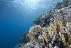 μπλε καθαρό τροπικό ύδωρ ψ&alph Στοκ Φωτογραφίες