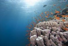 μπλε καθαρό τροπικό ύδωρ ψ&alph Στοκ φωτογραφίες με δικαίωμα ελεύθερης χρήσης
