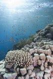 μπλε καθαρό τροπικό ύδωρ ψ&alph Στοκ Εικόνες