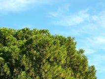 Μπλε και πράσινος Στοκ Φωτογραφίες
