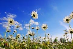 μπλε καλοκαίρι ουρανού λουλουδιών κάτω Στοκ φωτογραφία με δικαίωμα ελεύθερης χρήσης