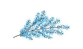 Μπλε κλάδος πεύκων στενό δέντρο έλατου κλάδων επάνω απεικόνιση αποθεμάτων