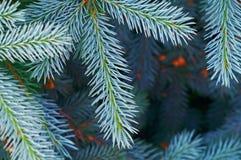 μπλε κομψό δέντρο κινηματ&omicro στοκ φωτογραφίες με δικαίωμα ελεύθερης χρήσης