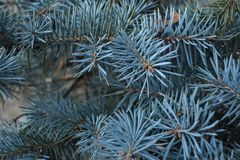 Μπλε κομψό υπόβαθρο Μπλε σύσταση srpuce Στοκ Φωτογραφίες