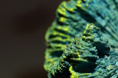 Μπλε κοράλλι σκελετών στοκ εικόνες με δικαίωμα ελεύθερης χρήσης