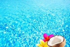 Μπλε κυανό νερό στην πισίνα, υπόβαθρο με την καρύδα και τροπικά λουλούδια Στοκ Εικόνα