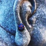 Μπλε κόκκινο γυναικείου ζωύφιου του Βούδα στοκ φωτογραφίες
