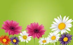 μπλε κόκκινο λουλουδιών διανυσματική απεικόνιση