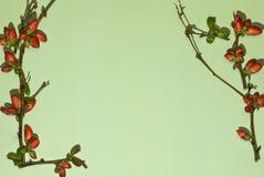 μπλε κόκκινο πλαισίων Στοκ φωτογραφίες με δικαίωμα ελεύθερης χρήσης