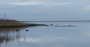 Μπλε λίμνη εν την ειρήνη φθινοπώρου και ήρεμος απόθεμα βίντεο