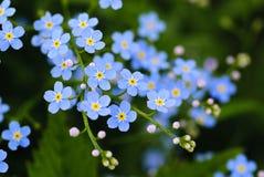 μπλε λιβάδι λουλουδιών