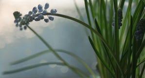 μπλε λουλουδιών κινηματογραφήσεων σε πρώτο πλάνο bokeh υποβάθρου ανθών όμορφη φύση φύλλων άνοιξη πράσινη στοκ εικόνες