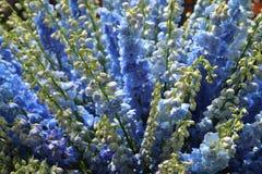 Μπλε λουλούδια στο θόλο λουλουδιών Στοκ Φωτογραφία