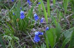 μπλε λουλούδια Στοκ Φωτογραφίες