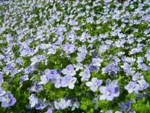 μπλε λουλούδια στοκ φωτογραφίες με δικαίωμα ελεύθερης χρήσης