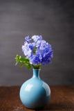 Μπλε λουλούδια plumbago στο βάζο Στοκ Φωτογραφία