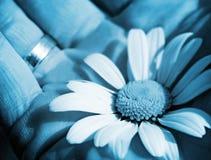 μπλε λουλούδι ανασκόπη&sig Στοκ εικόνες με δικαίωμα ελεύθερης χρήσης