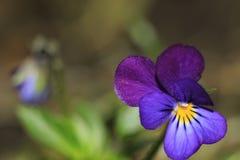 Μπλε λουλούδι από ένα παραμύθι στοκ φωτογραφία