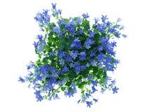 μπλε λουλούδια Στοκ Φωτογραφία