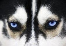 μπλε μάτια Στοκ Εικόνες