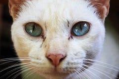 Μπλε μάτι γατών ουρανού Στοκ Εικόνες