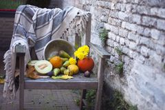 μπλε μακρύς ουρανός σκιών φύσης φθινοπώρου Φρούτα πτώσης στο ξύλο thanksgiving λαχανικά φθινοπώρου σε μια παλαιά καρέκλα στον κήπ στοκ εικόνα