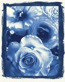 μπλε μαργαρίτες Ντελφτ s διανυσματική απεικόνιση