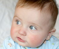 μπλε μωρών στοκ φωτογραφία με δικαίωμα ελεύθερης χρήσης