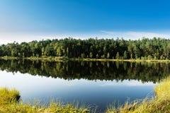 Μπλε νερό σε μια δασική λίμνη με τα δέντρα πεύκων Στοκ Φωτογραφία
