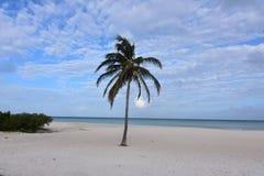 Μπλε ουρανοί και ωκεανός Viberant στην ακτή της Αρούμπα στοκ φωτογραφίες με δικαίωμα ελεύθερης χρήσης