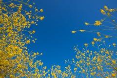 μπλε ουρανός αύξησης μου Στοκ φωτογραφία με δικαίωμα ελεύθερης χρήσης